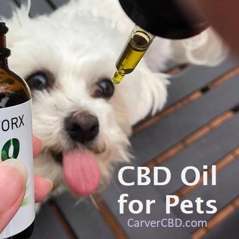Best CBD for Pets